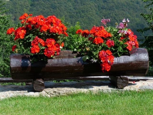 Piante in Vaso- Consigli per la cura estiva - Solaria Giardini