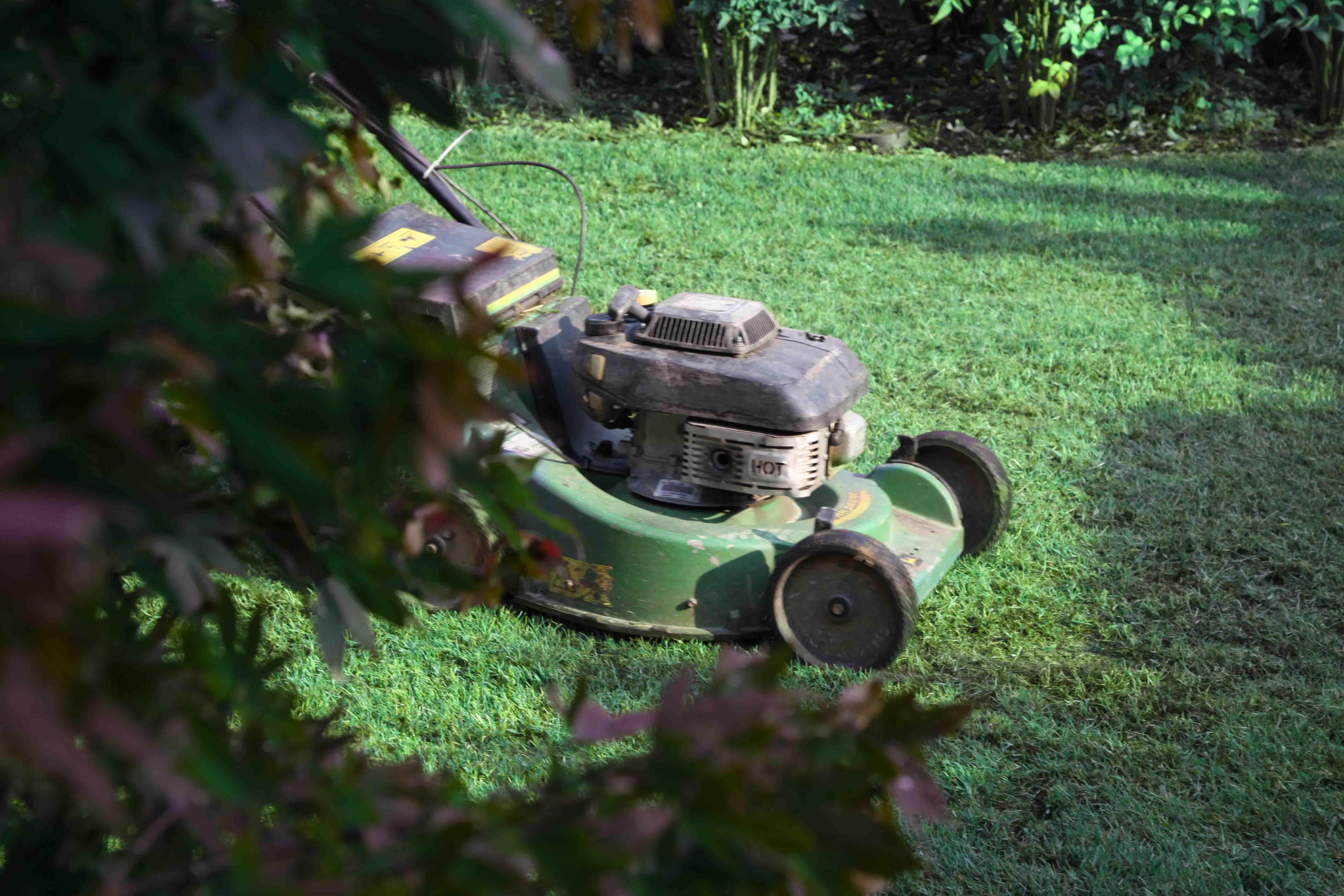 Tappeto Erboso - la fine dell'estate - Solaria Giardini