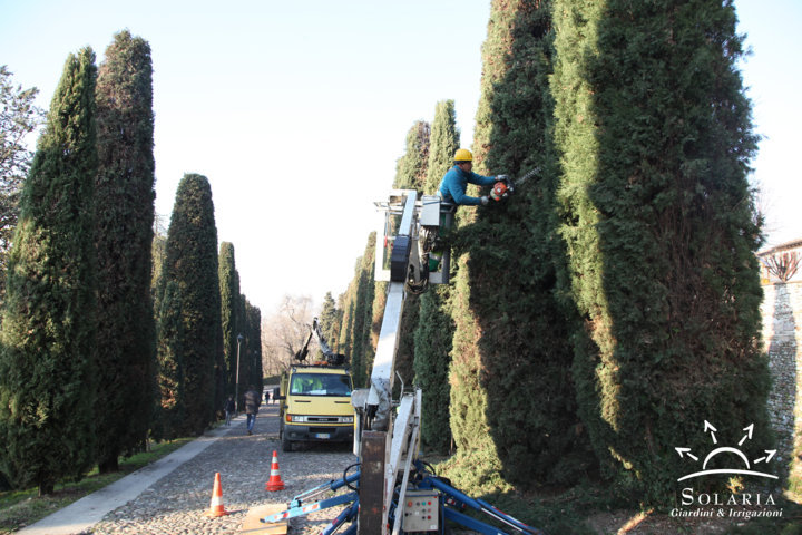SIEPI, ARBUSTI E ALBERI – Potature in Gennaio e Febbraio - Solaria Giardini