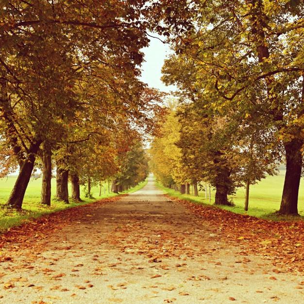 Consigli per il giardino in Novembre e Dicembre