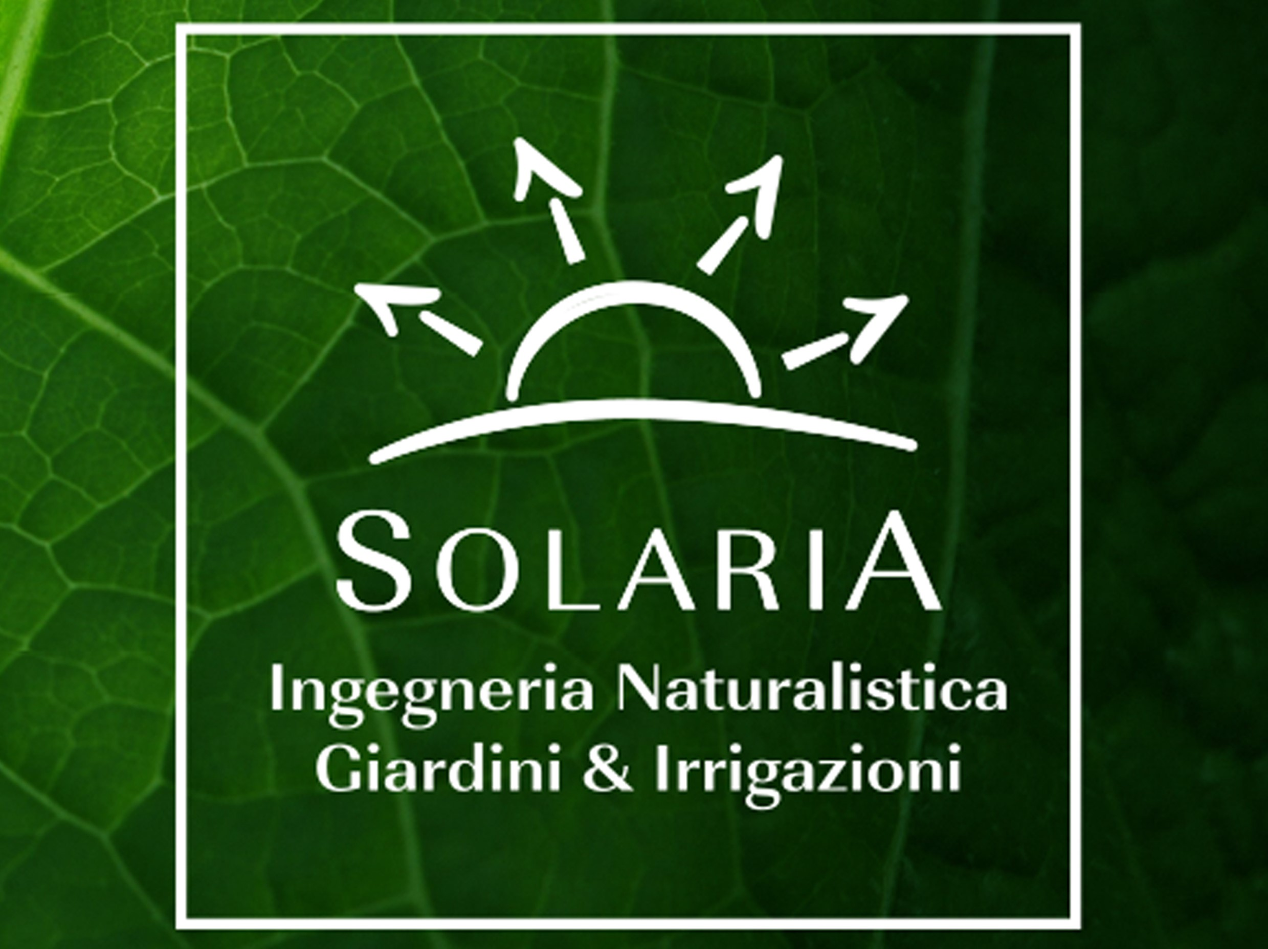Bulbose a Fioritura primaverile - Blog - Solaria Giardini