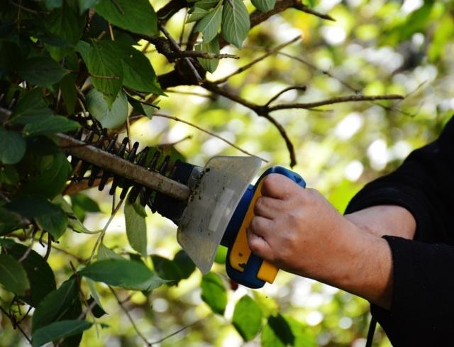 Potatura siepi, arbusti ed alberi - i consigli di Solaria Giardini